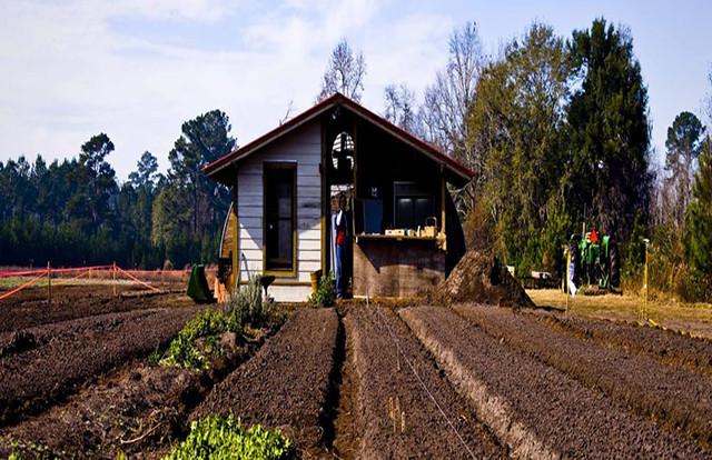 Estudos relacionam uso de agrotóxicos com suicídio de agricultores
