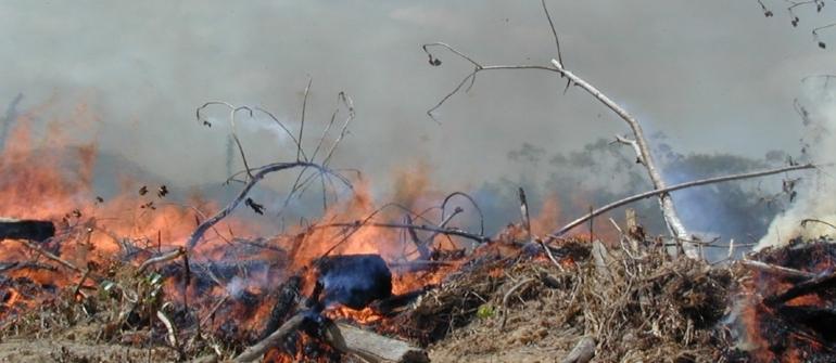 Amazônia tem 'três cidades de São Paulo' desmatadas e risco de queimadas