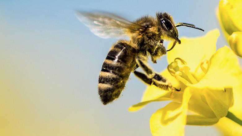 União Europeia confirma proibição de pesticidas prejudiciais às abelhas